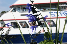 Flowers and ferries, quintessential Mackinac.