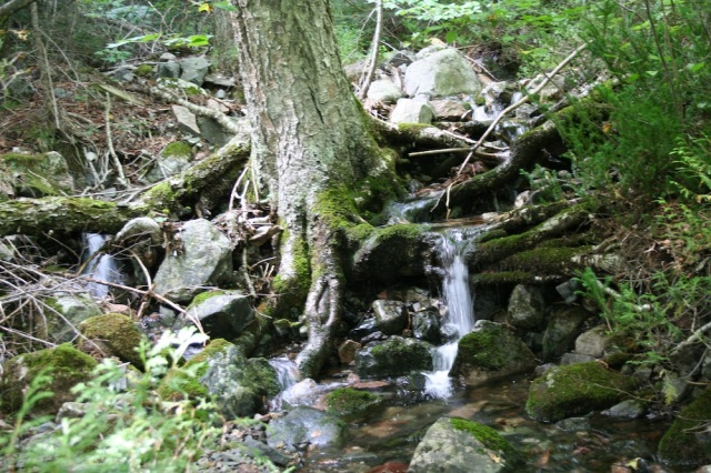 A magical little brook that wound it's way along our path.