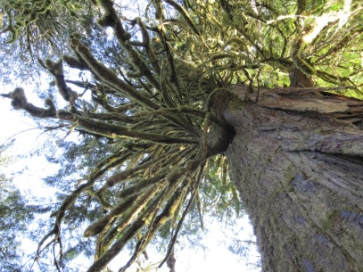 Salmon River Moss