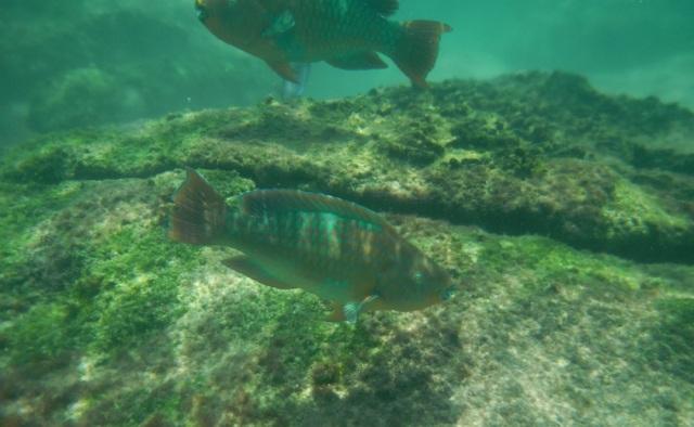 Snorkel Find