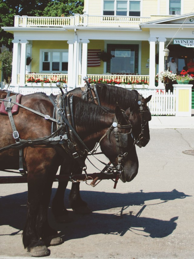 Horses Downtown